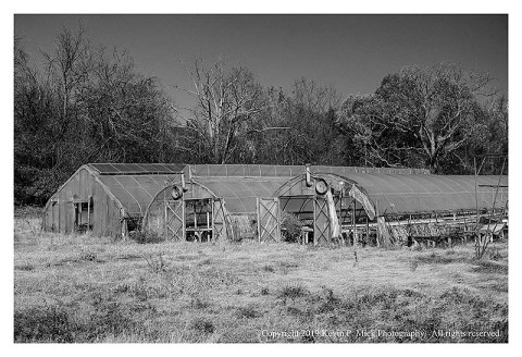 BW photograph of the greenhouses, which are part of an abandoned nursery.