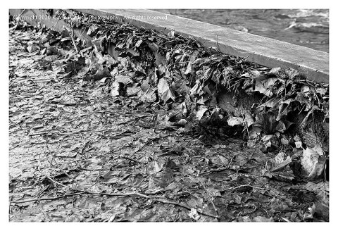 BW photograph of muddy leaves plastered against a bulkhead after a flooding.