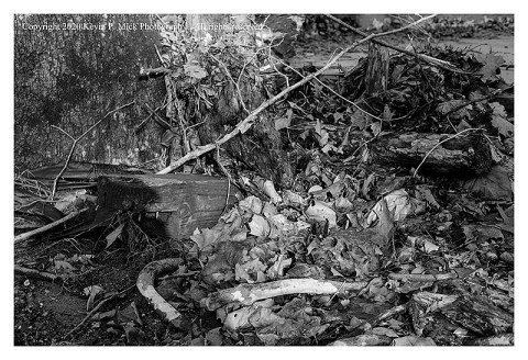 BW photograph of debris around a tree trunk after a flooding.