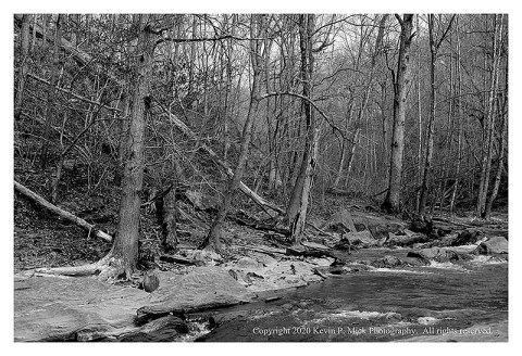 BW photograph of downed trees and tree debris.