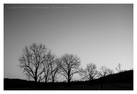 BW photograph of backlit silhouetted trees in the early morn.