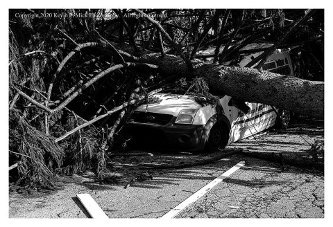 BW photograph of a large pine tree laying atop a delivery van after a strong storm-closer view.