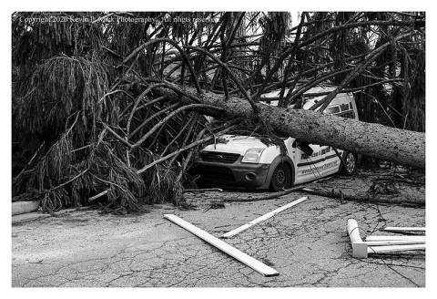 BW photograph of a large pine tree laying atop a delivery van after a strong storm.