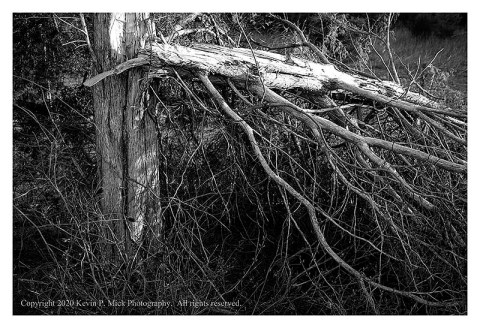 BW photograph of a broken tree.