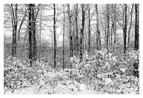 BW photograph of a wooded area looking toward a mountain after a light snow.