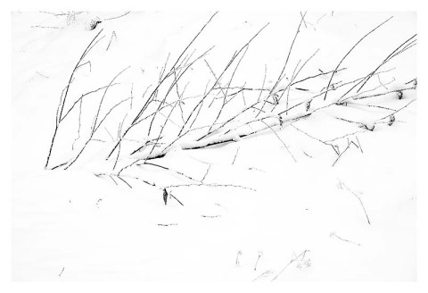 BW photograph of a branch partially buried in snow.
