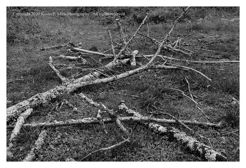 BW photograph looking across a broken tree branch laying on the ground.