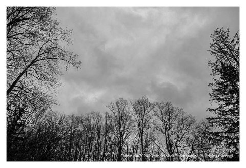 BW photograph of rain clouds framed by trees.