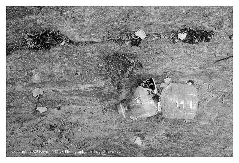 BW photograph of a crushed plastic bottle laying atop a rock.