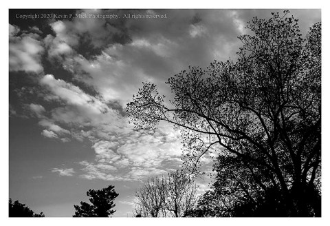 BW photograph of an evening sky with silhouetted trees in the foreground.