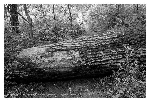 BW photograph of a tree trunk laying across a hiking trail.