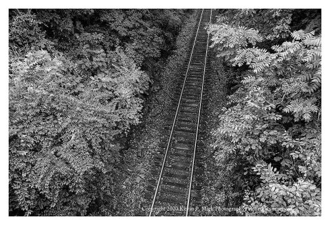 BW photograph of the Midland Railway running in a canyon of trees.