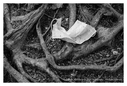 BW photograph of a discarded face mask laying atop tree roots.