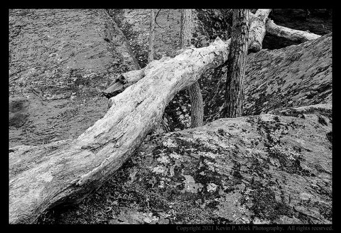 BW photograph of a fallen tree wedged between two others and laying atop a large rock formation.