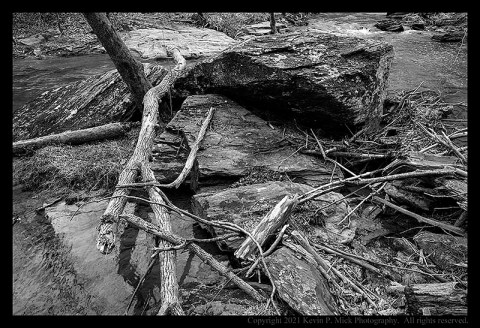 BW photograph of trees wrapped around rocks after a flooding event.