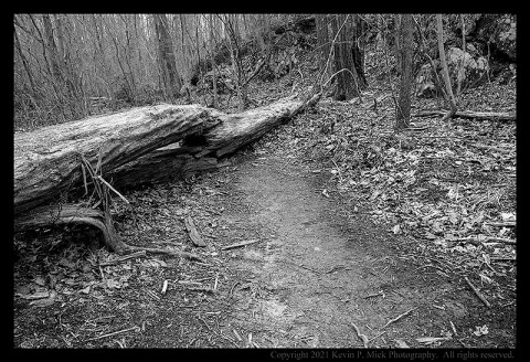 BW photograph of a tree laying across a trail.