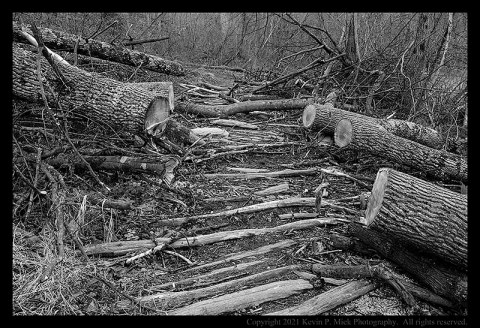 BW photograph of a path cut through fallen trees cut to allow for walking on a trail.