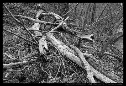 BW photograph of a tree fallen across a trail.