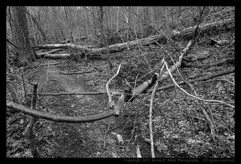 BW photograph of downed trees across a trail.