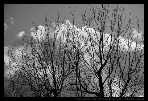 BW photograph of clouds and trees hours before a thunderstorm.