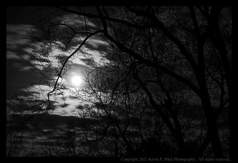 BW photograph of a full moon on a cloudy morning as seen through a tree.