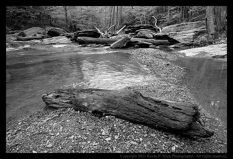 BW photograph of a portion of tree trunk laying on some gravel after local flooding.