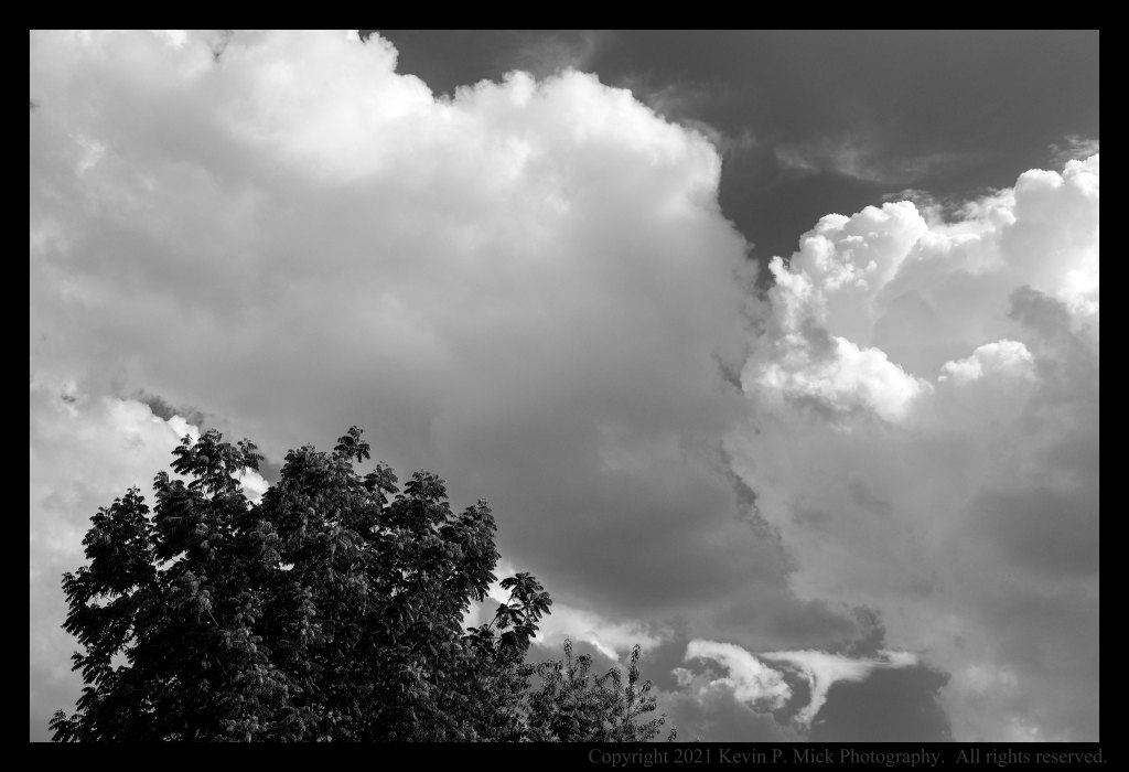 BW photograph of cumulous clouds forming behind a tree.