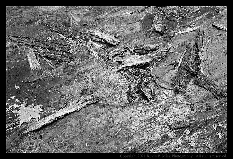 BW photograph of tree debris laying atop a large, wet boulder.
