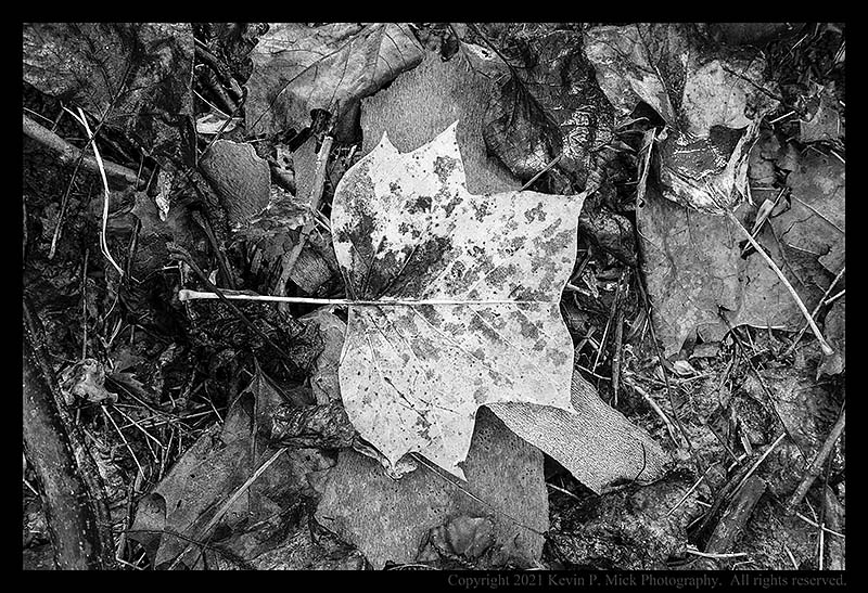 BW photograph of a downed leaf atop other tree debris after a storm.